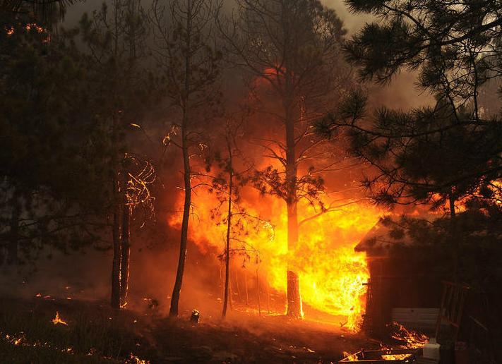 森林火灾1